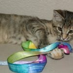 """Tie Dyed"" Ribbon Cat Toy"