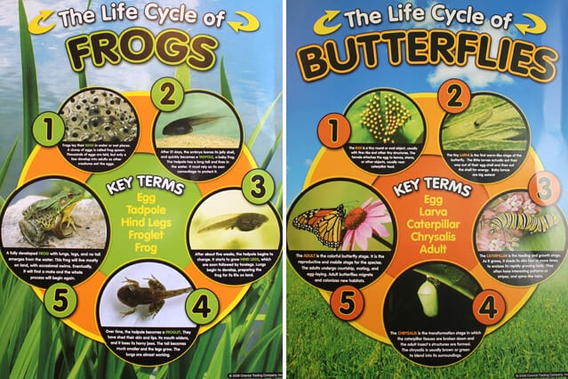 Lifecycle Posters from Oriental Trading Company