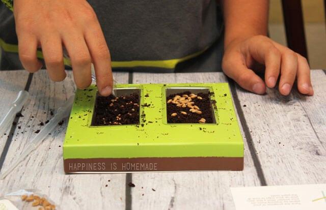 Planting Kiwi Crate Garden Seeds