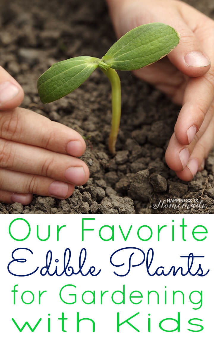 Favorite Plants for Gardening with Kids - Happiness is Homemade