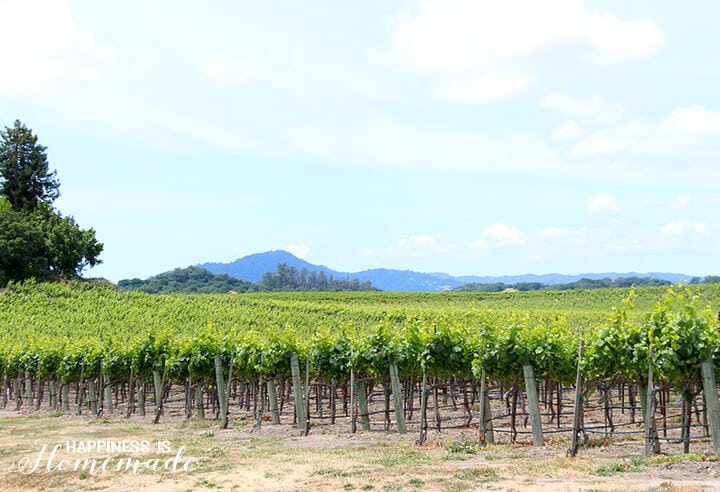 Sonoma-Cutrer Vineyard Tour