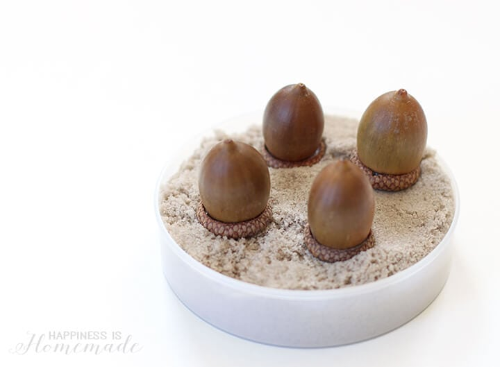 Acorns in Kinetic Sand
