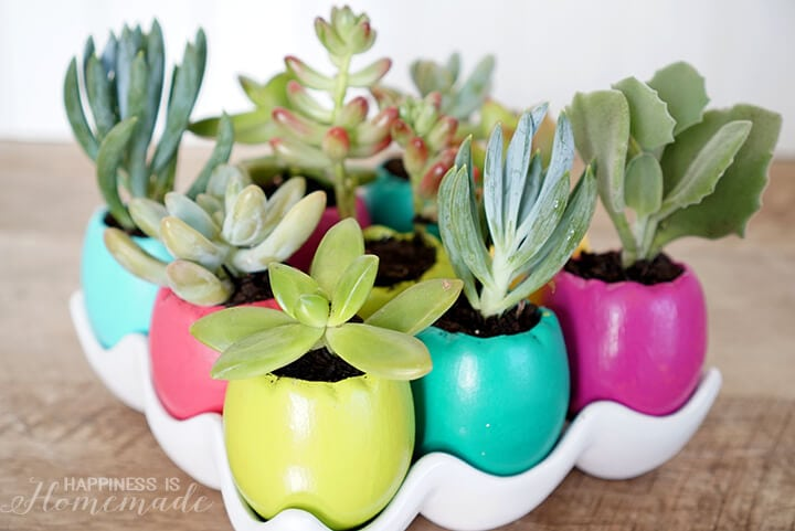 Easter Egg Succulent Planters for Spring
