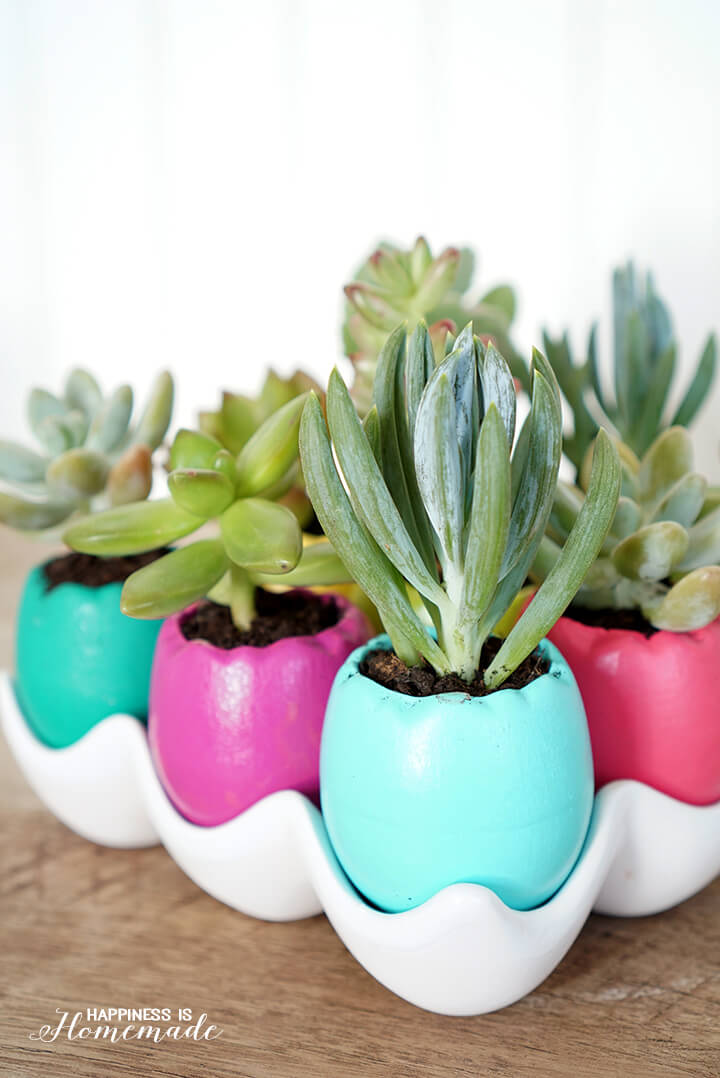 Egg Shell Succulent Planters