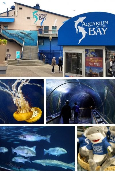 Aquarium of the Bay – San Francisco