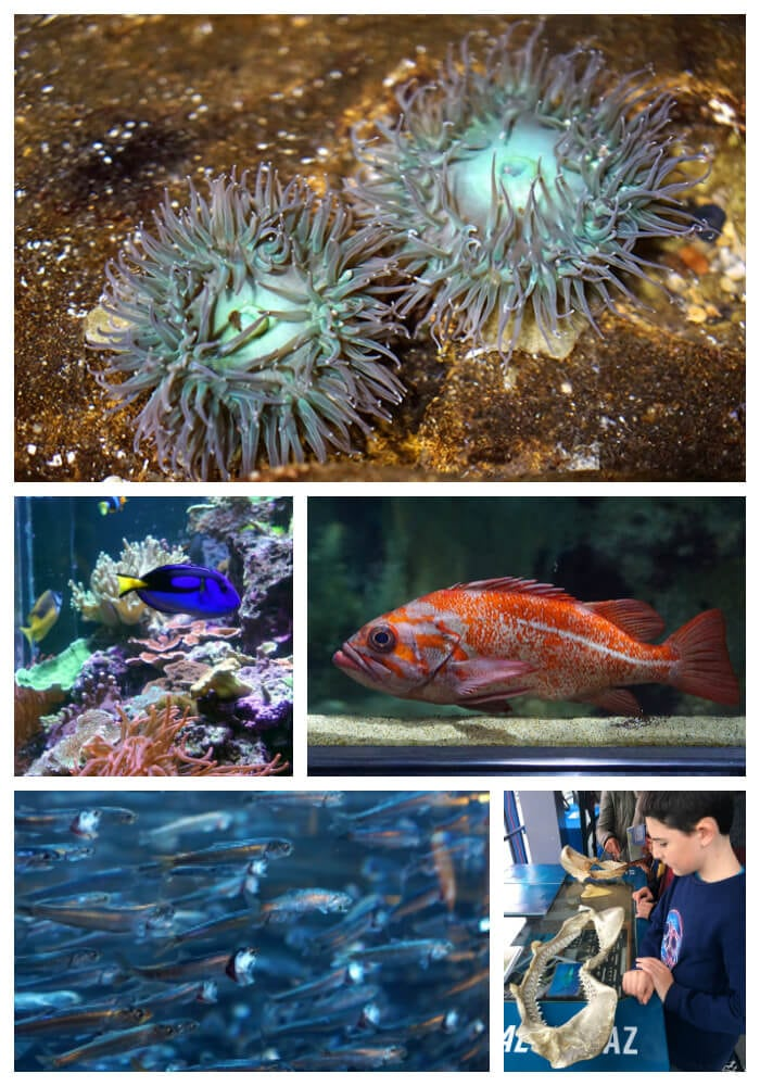 Aquarium Of The Bay San Francisco Happiness Is Homemade