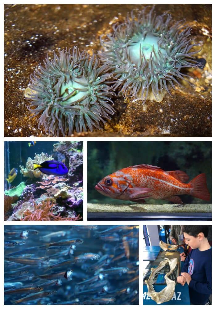 Aquarium of the Bay Collage