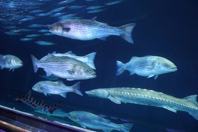 Fish and Sharks in the Aquarium Tunnel