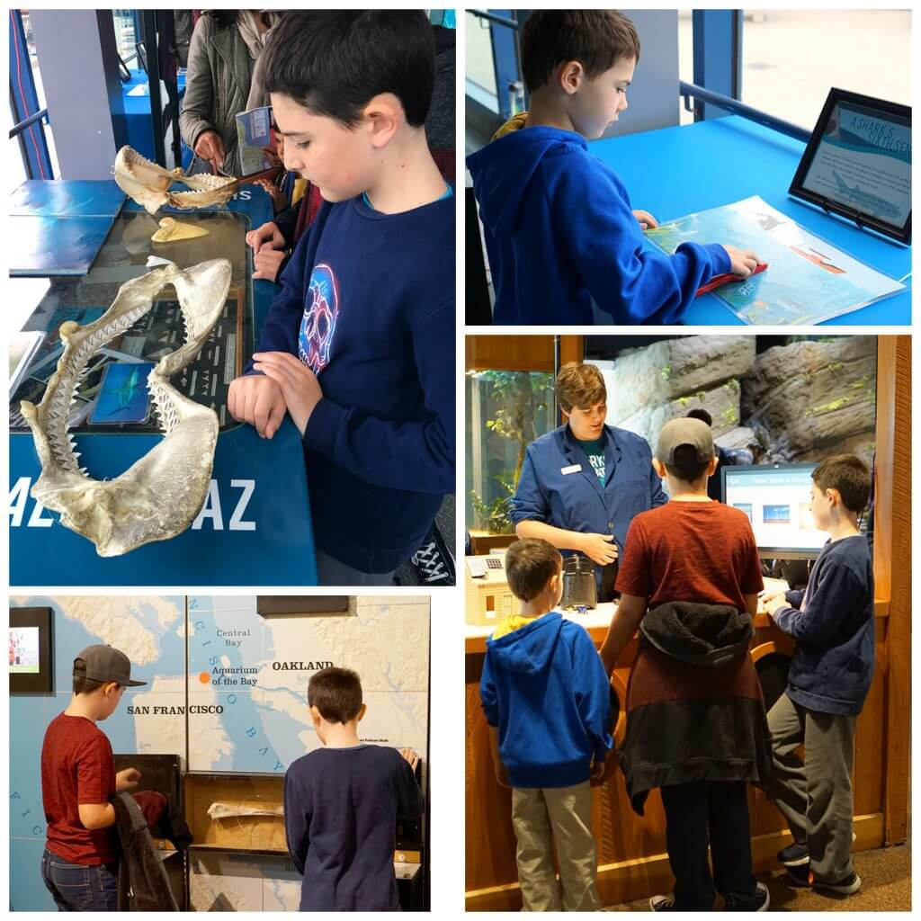 Interactive Displays at the Aquarium of the Bay