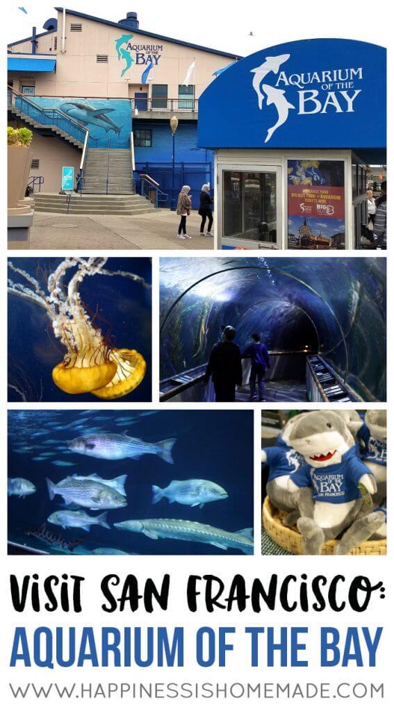 Visit San Francisco - Aquarium of the Bay