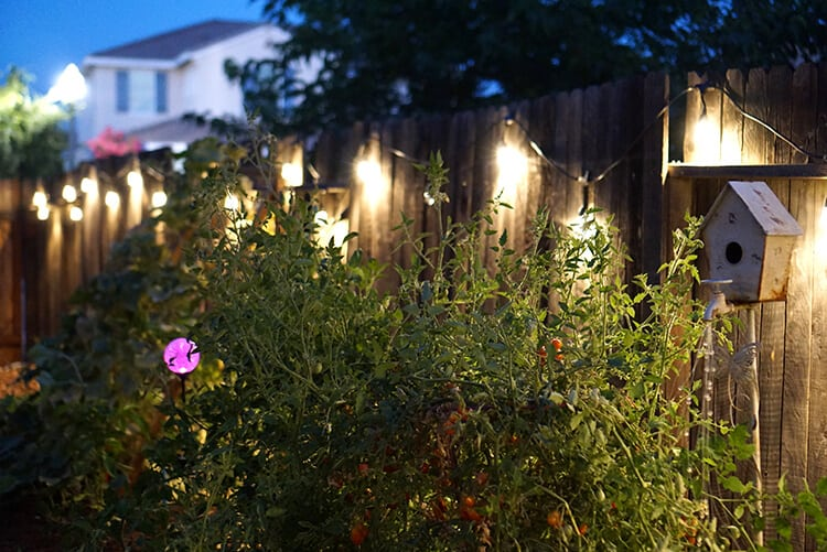 Garden with Enbrighten String Lights