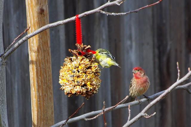 pine-cone-peanut-butter-feeder